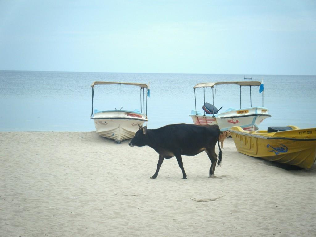 DSCF29071 1024x768 Les plages de Tricomalee & Pigeon Island