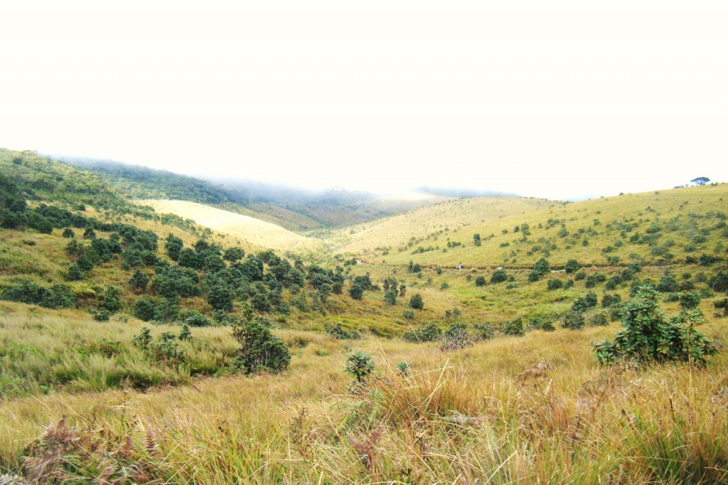 Horton_plains