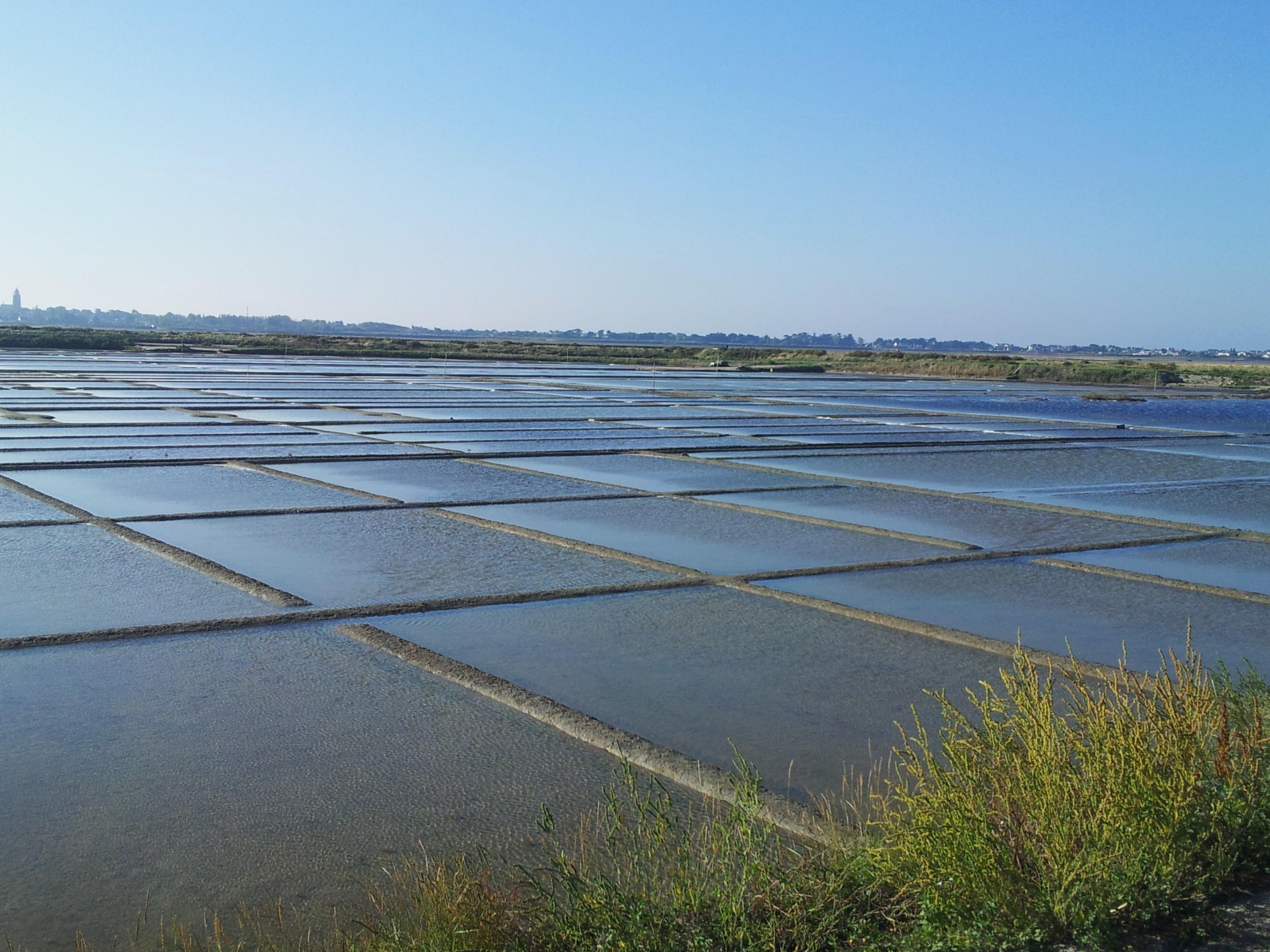 Marais Salants au Croisic