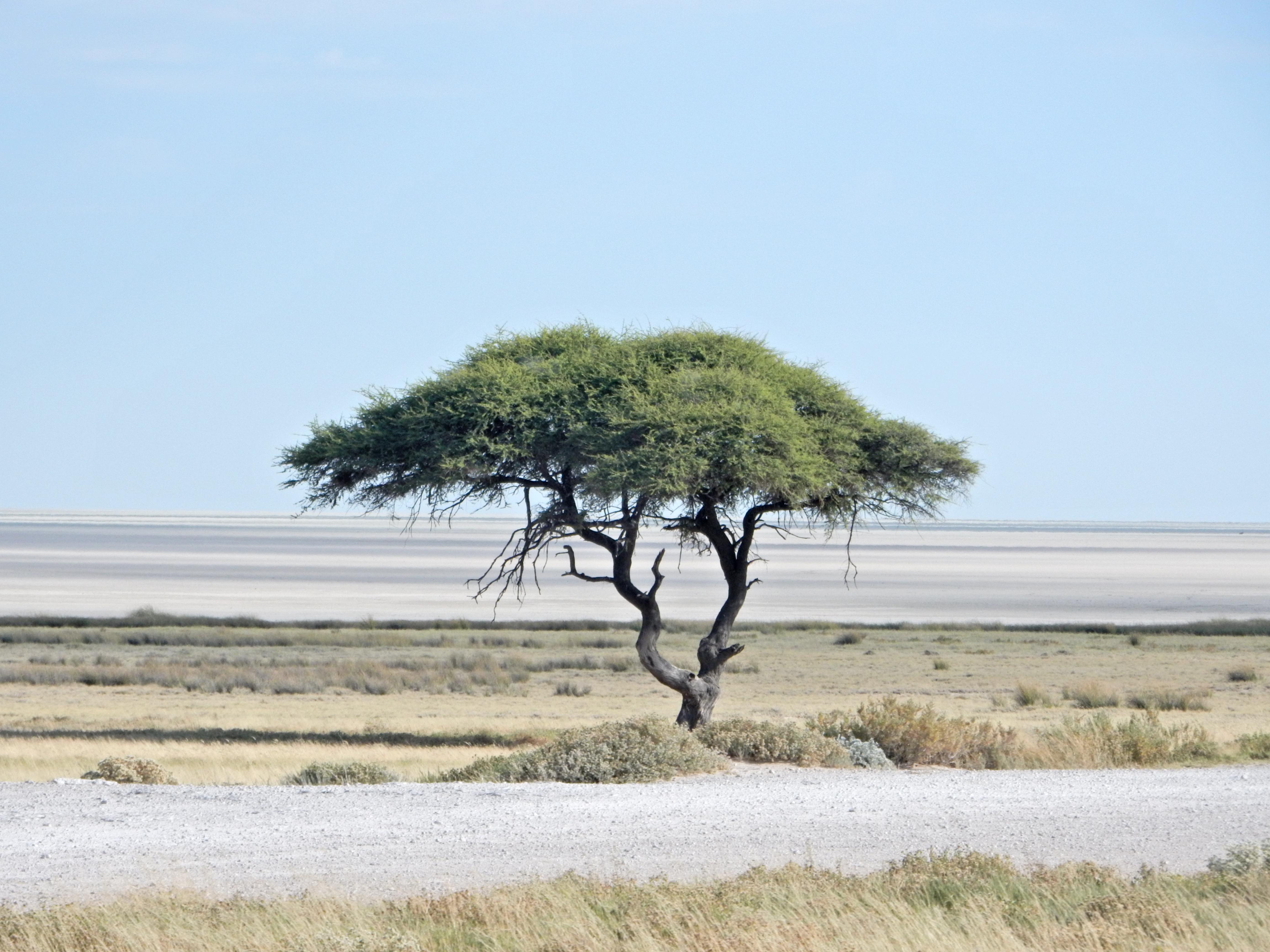 DSCN0963 Voyage de 2 semaines en Namibie en mai   Avant de partir