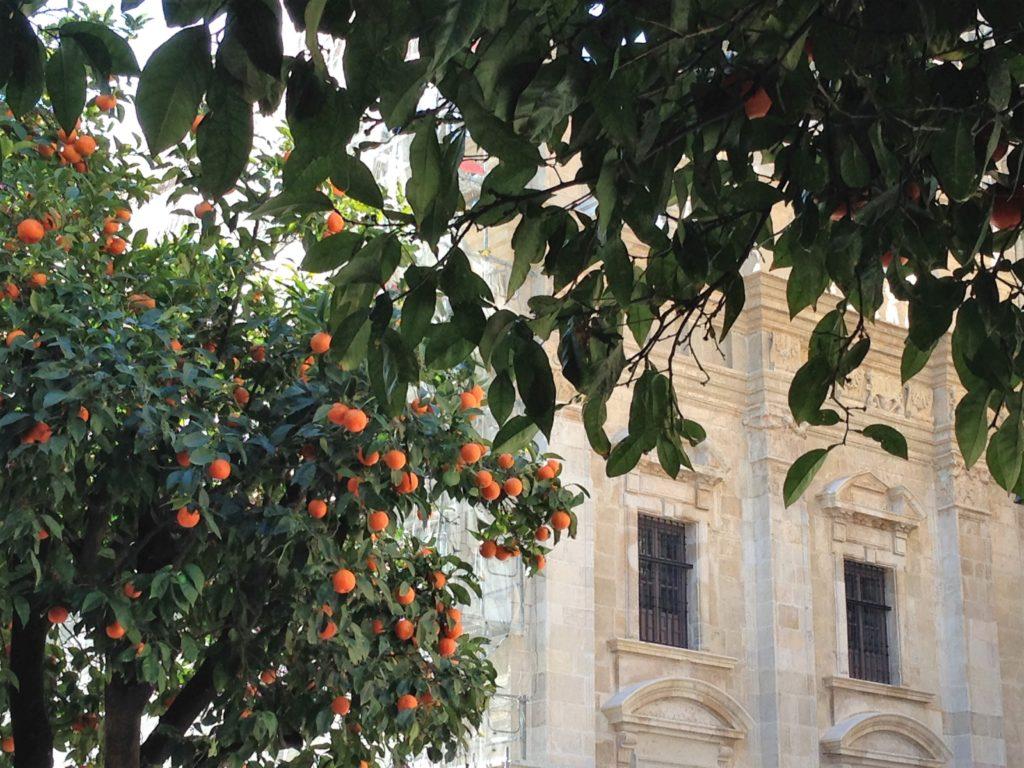 Oranger_seville