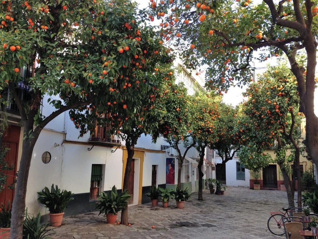 Santa_cruz_seville