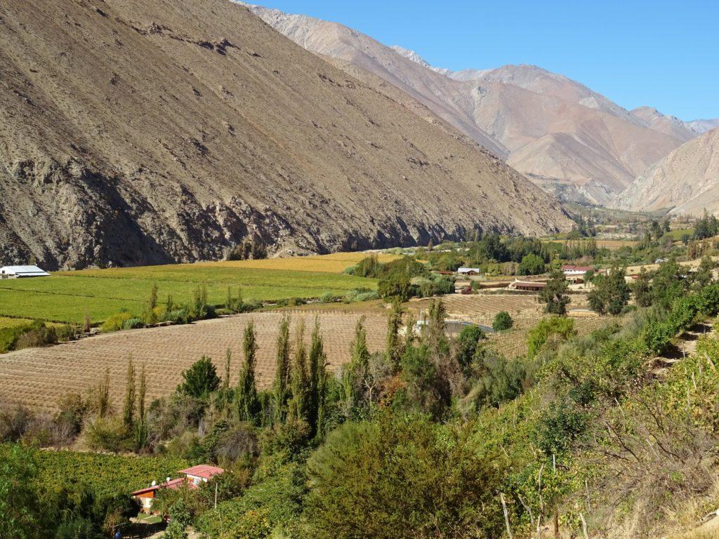 Pisco - Vallée del Elqui