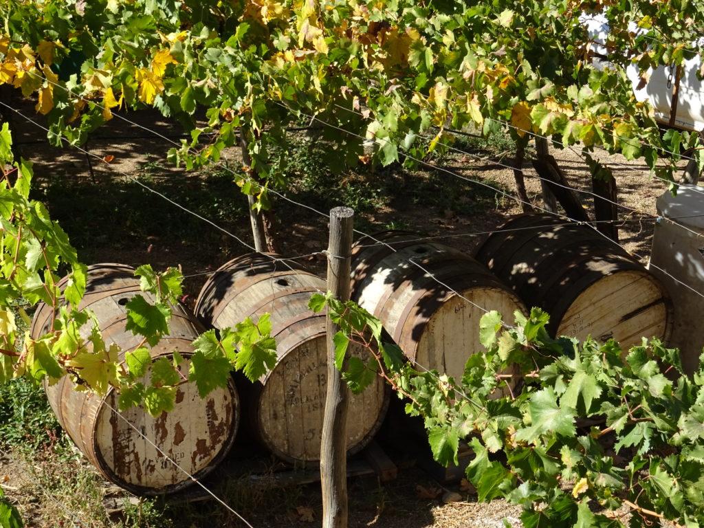 Distillerie vallée de l'Elqui
